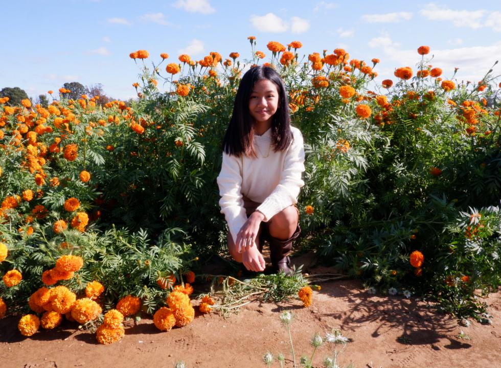 Like Yeay Pov 1 - Lanica Angpak - Young girl in a field of marigolds