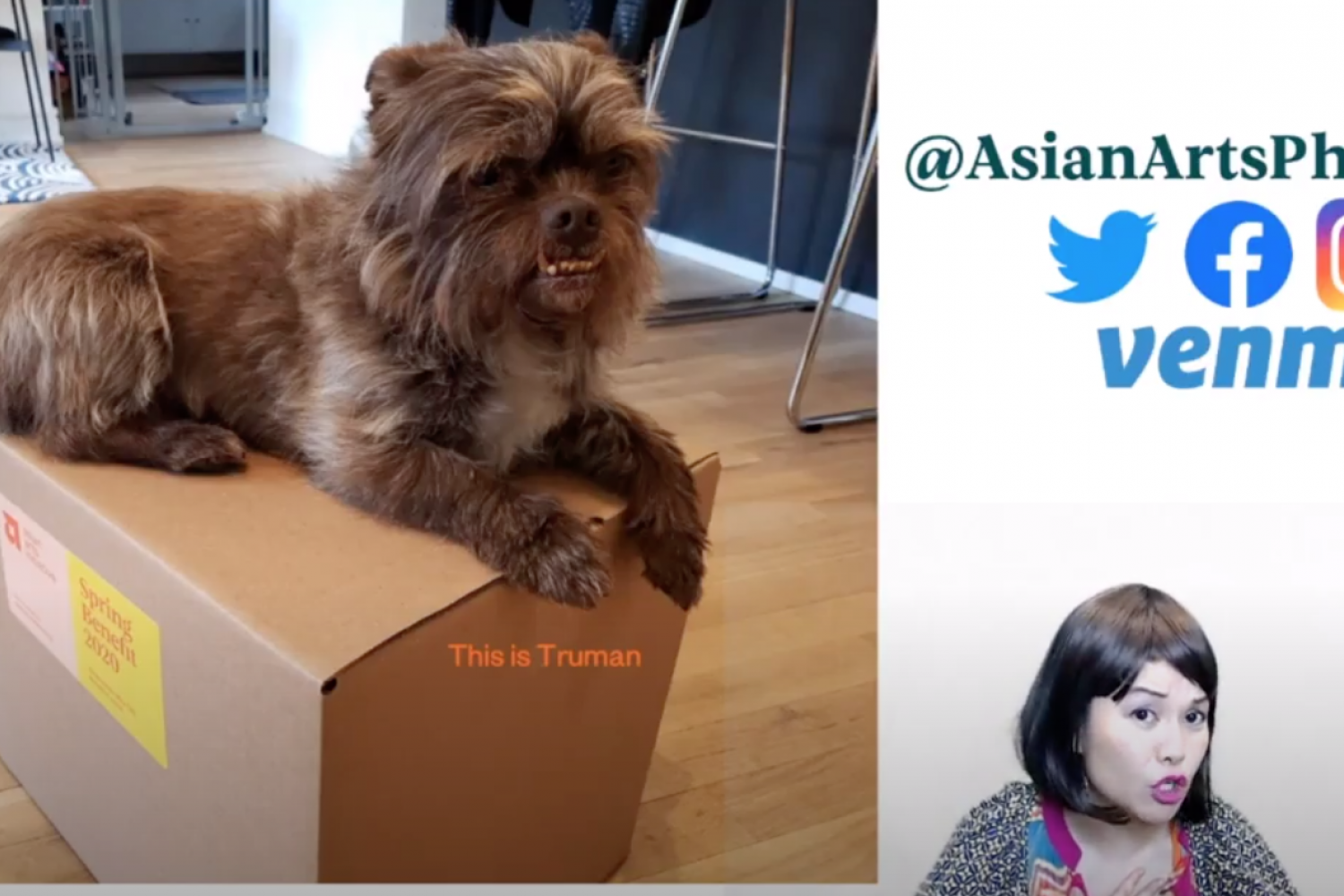 Cute small dog on a box with AAI logos and image of hostess superimposed